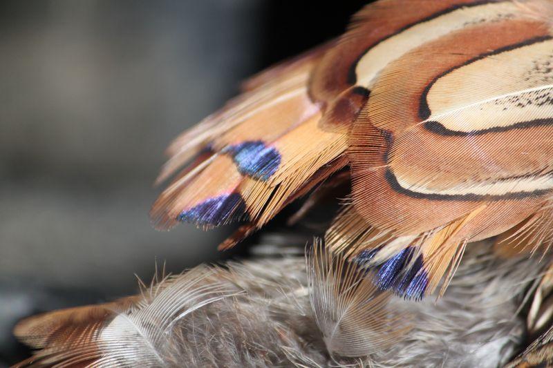 Pheasantopener2011 122