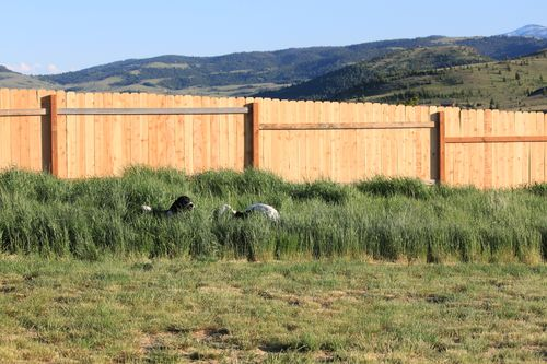 New fenced yard.