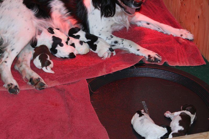 Newborns ; Girls with mom, boys on the heating pad.