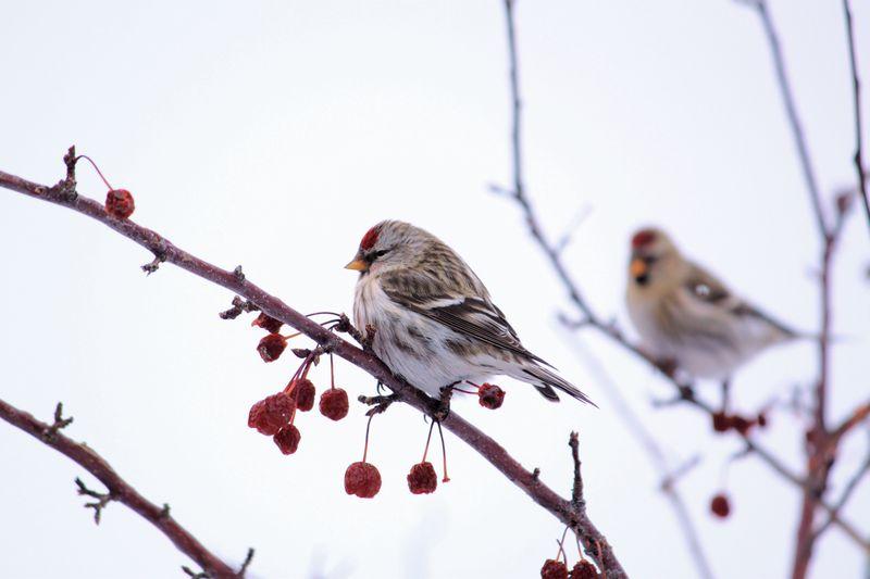 Birdsandpups 053