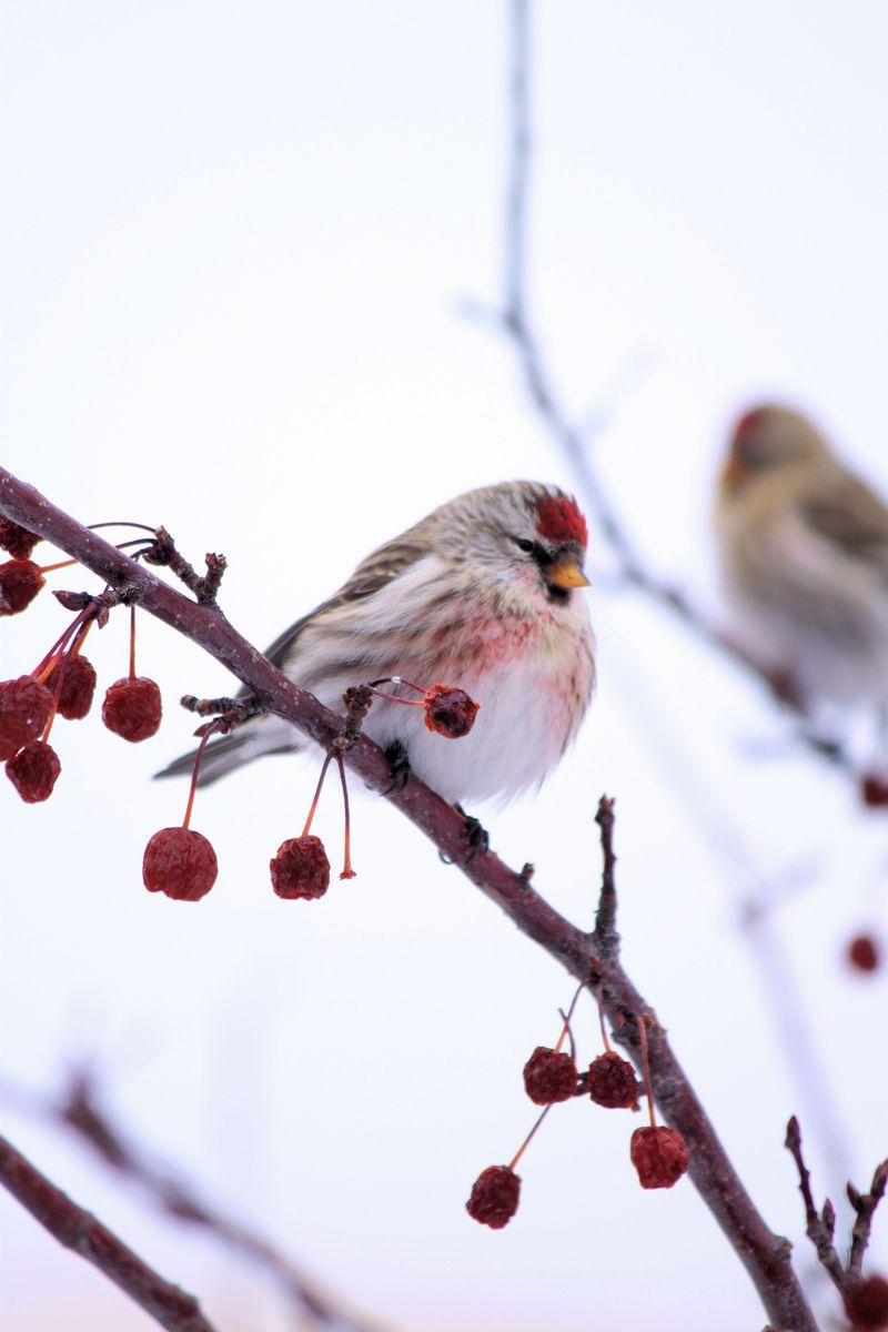 Birdsandpups 057