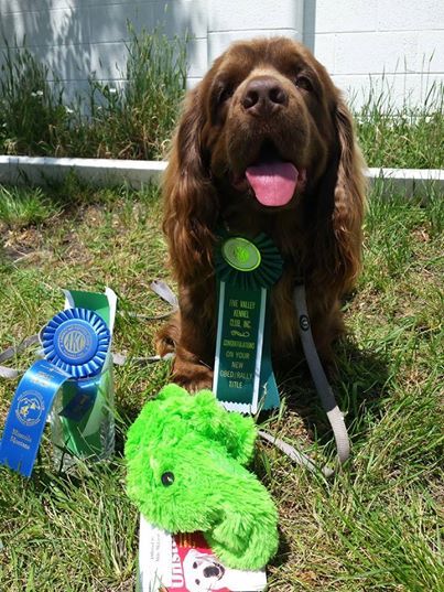 Sussex Spaniel, Hellfire Gundogs